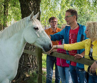 Drei Personen schauen einem Pferd zu