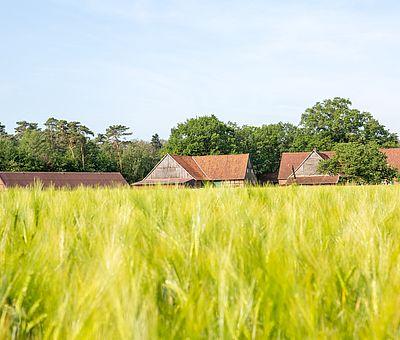 Feld mit Hof im Hintergrund